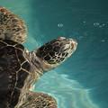 Photos: 海亀