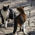 Photos: 猫喧嘩