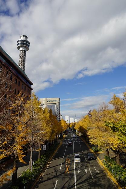 タワーと銀杏