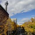 写真: タワーと銀杏