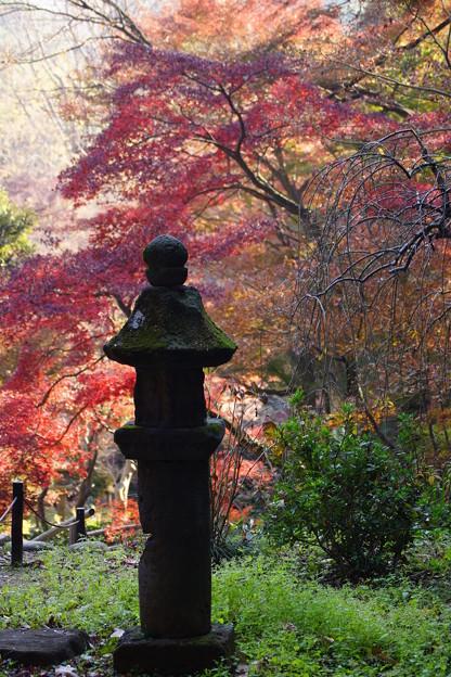 晩秋の三渓園
