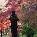 Photos: 晩秋の三渓園