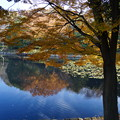 Photos: 晩秋の三ッ池公園