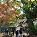 Photos: 晩秋の春草蘆