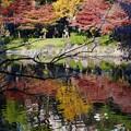 湖面の紅葉
