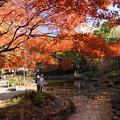 晩秋の横浜公園