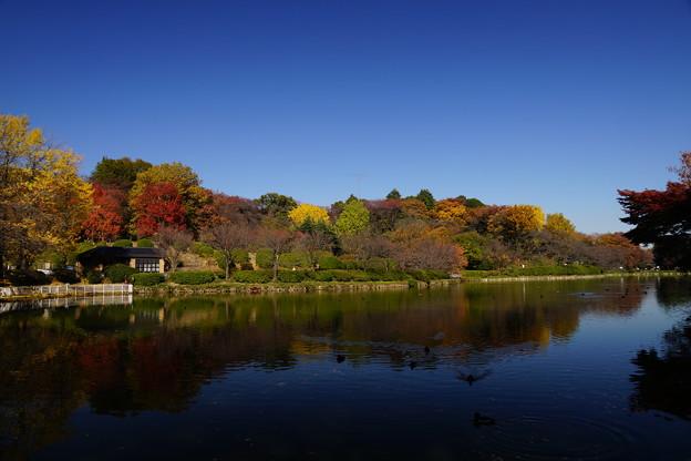 晩秋の三ッ池公園