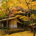 写真: 晩秋の春草蘆