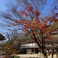 Photos: 晩秋の横溝屋敷