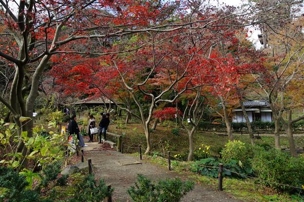 晩秋の三渓園外苑