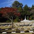 晩秋の英連邦墓地