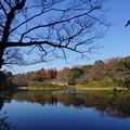 写真: 晩秋の三ッ池公園