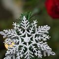 写真: クリスマス飾り