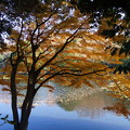 写真: 晩秋の湖畔