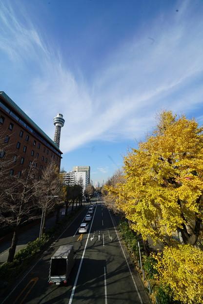 マリンタワーと銀杏