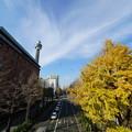 Photos: マリンタワーと銀杏