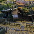晩秋の春草蘆
