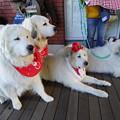 Photos: 4匹の犬