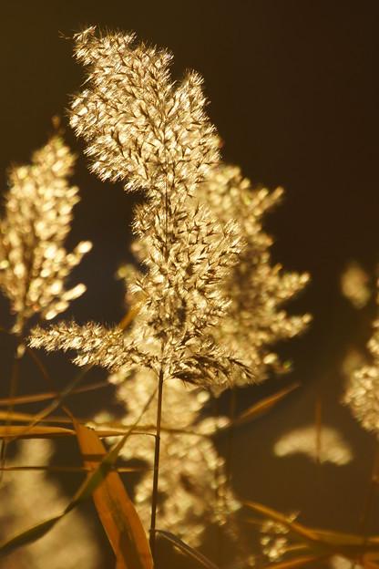 逆光の雑草