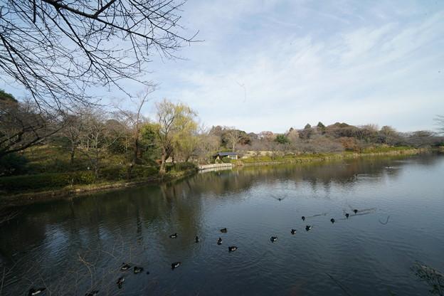 冬の三ツ池公園