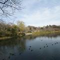 Photos: 冬の三ツ池公園