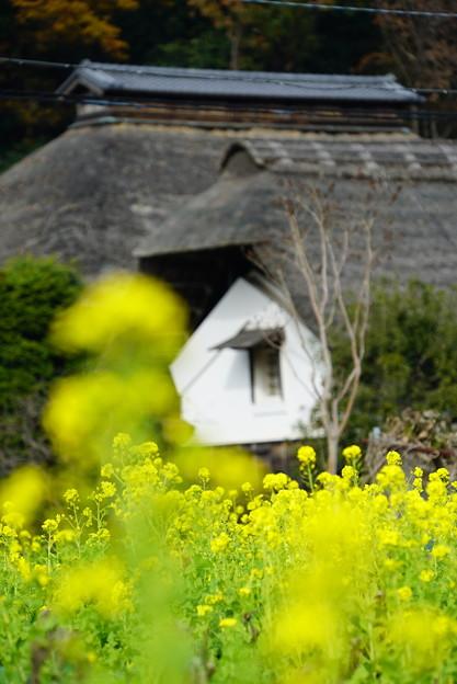 菜の花と古民家
