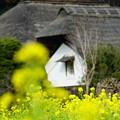 Photos: 菜の花と古民家