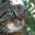Photos: 草藪の猫