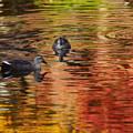 Photos: 紅葉愛でる鳥達