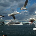 Photos: カモメ舞う港