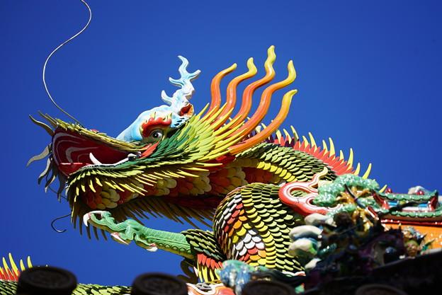 写真: 関帝廟の龍