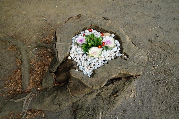 切り株花壇