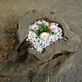 写真: 切り株花壇
