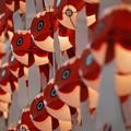 写真: 柳井金魚ちょうちん祭り