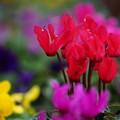 Photos: 冬の花々