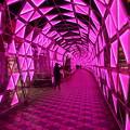 Photos: ピンクのトンネル