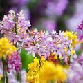 Photos: ランの花々
