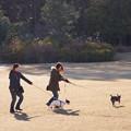 Photos: 犬の散歩
