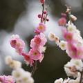 Photos: 春日野