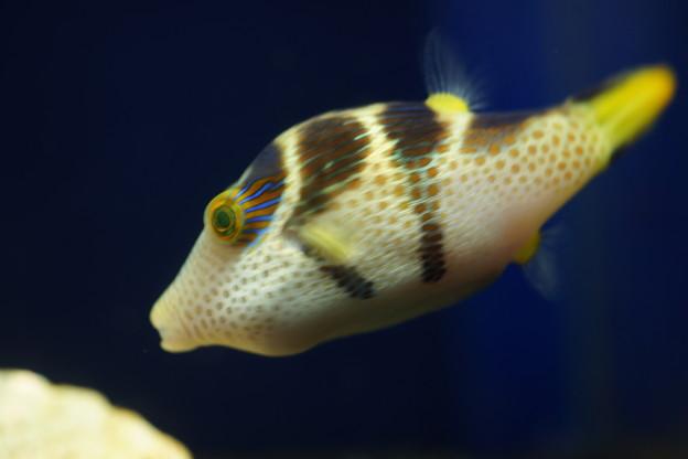 Photos: 魚