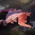 Photos: フラミンゴ