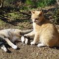 Photos: 猫二匹