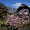 Photos: 横溝屋敷
