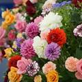 Photos: 春の花々