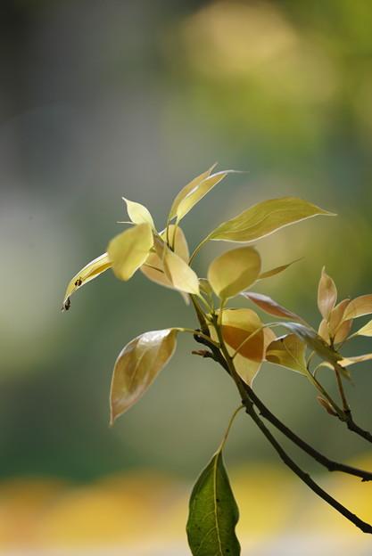 楠の芽生え