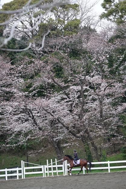 Photos: 乗馬場の春