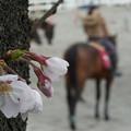 乗馬場の春
