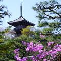 Photos: 躑躅と三重塔