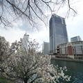 Photos: MMの桜
