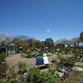 イングルシュローズの庭